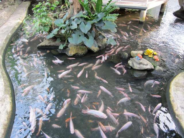 Пруд с рыбками в Саду бабочек