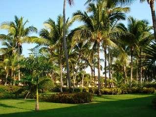 отель Iberostar Dominicana 4*
