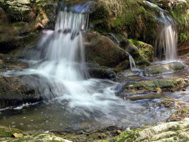 водопады в тисо-самшитовой роще