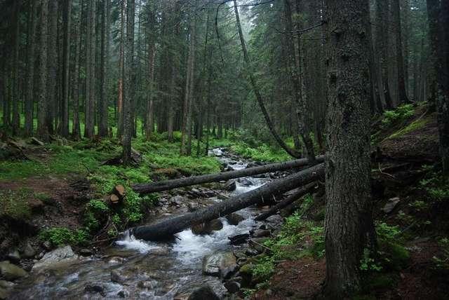 Лес у подножья Говерлы