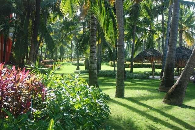 Территория отеля Iberostar Punta Cana