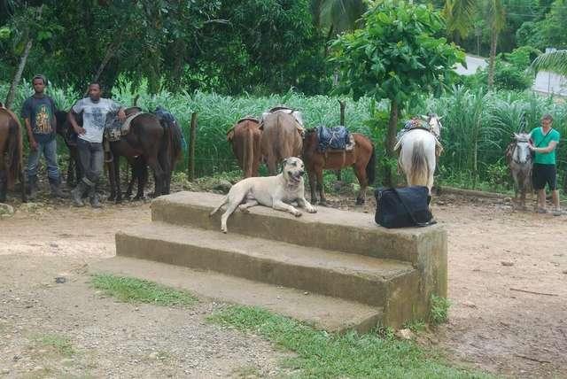Погонщики лошадей ждут туристов