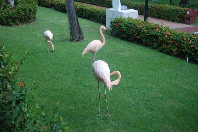 Те самые фламинго