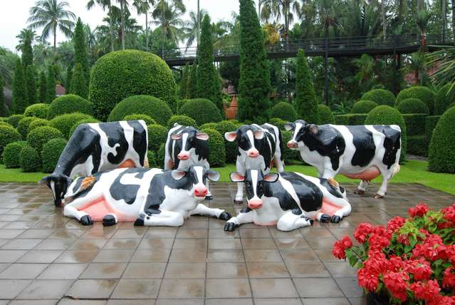 А вот и коровки!