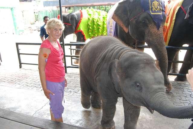 Вот таких слоников можно кормить бананами и тискать в парке Нонг Нуч