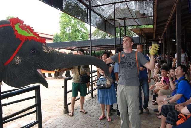 Но бананы нужно охранять от слоних, которые хотят утащить все сразу!