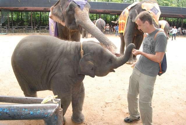 Еще один голодный слоненок!