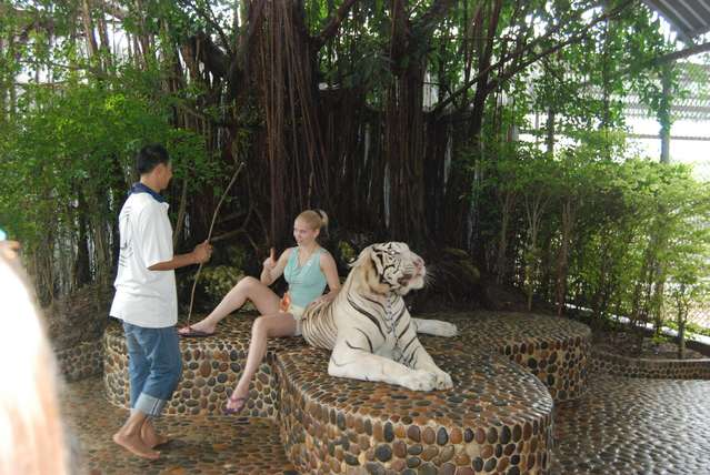 Можно сфотографироваться с белым тигром