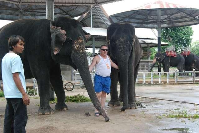 Слонихи и стильный турист в майке :) Точно из наших!