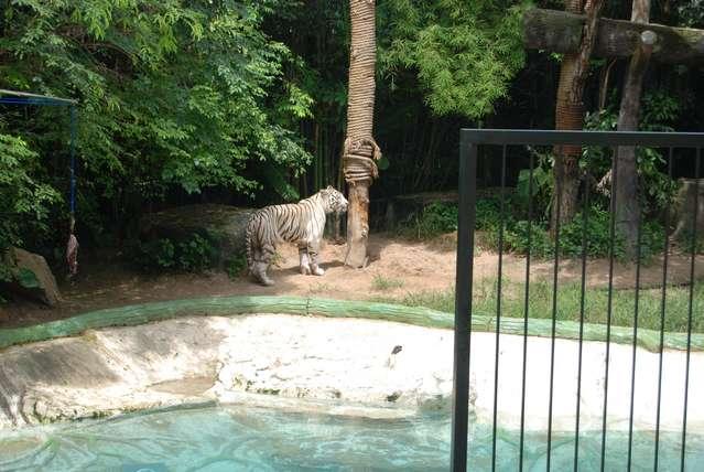 Так выглядит шоу в зоопарке Кхао Кхео
