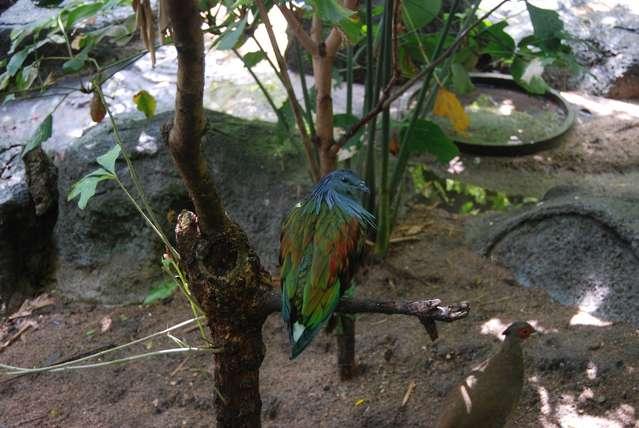 Вот таких птиц можно встретить в зоопарке