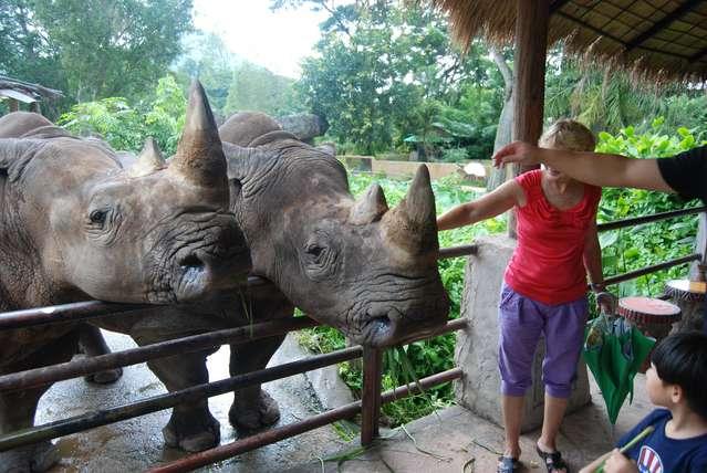 С носорогами нужно поосторожнее, могут и двинуть.