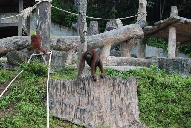 Ну и шимпанзе
