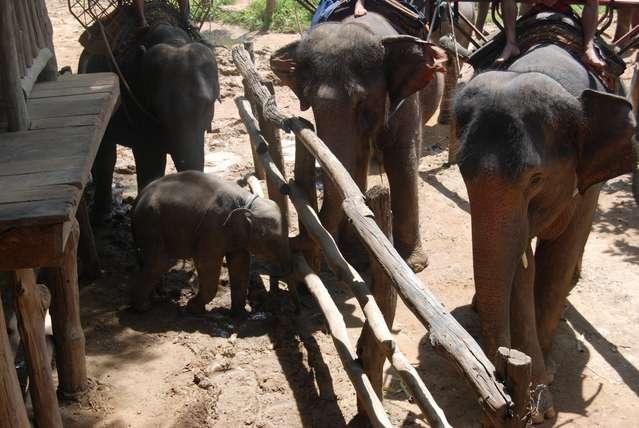 Место посадки на слонов