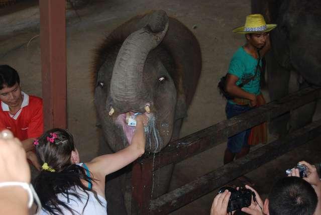 Кормление слоненка