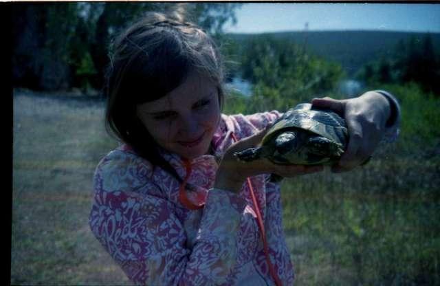 Черепахи ручные сопящие