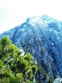 Альпы и можжевельник