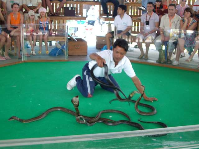 Змеиная ферма. Шоу змей.