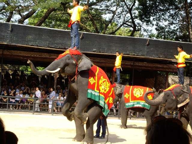 Шоу слонов.