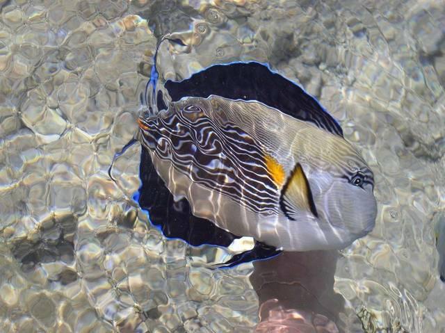 Я есть на этой фотографии - вернее, моя правая нога под рыбой:-)