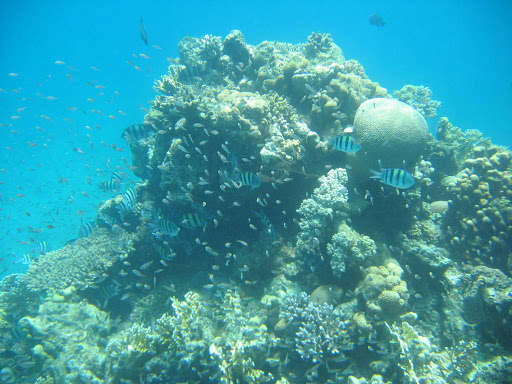 Подводная съёмка.Коралл