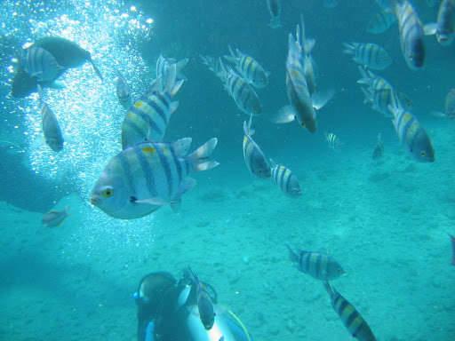 Подводная съёмка. Среди рыб