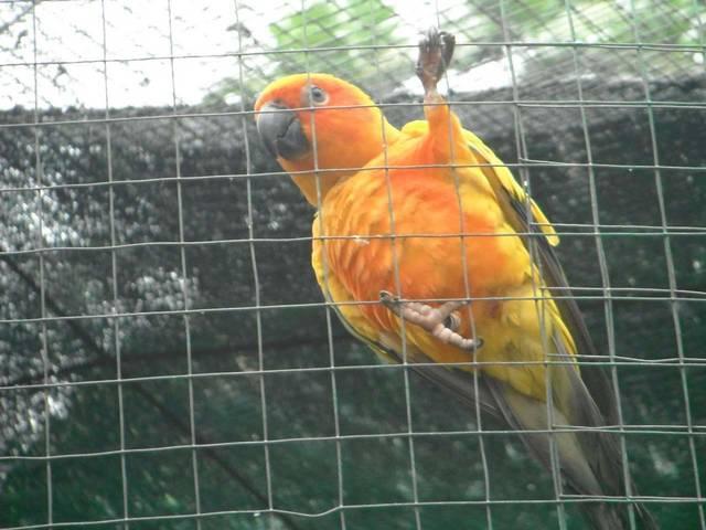 Птичий парк