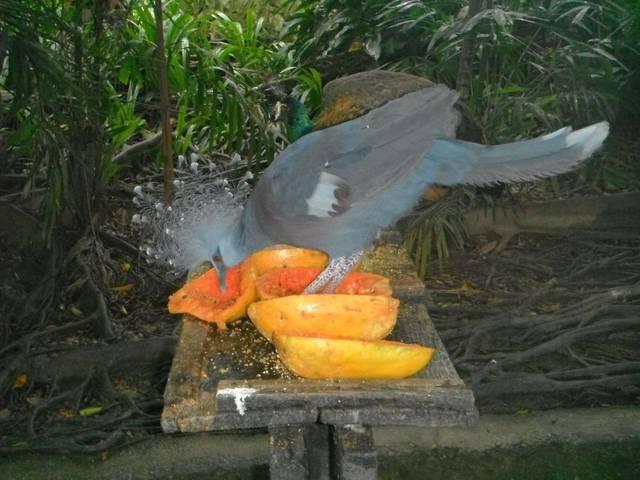 Птичий парк 3