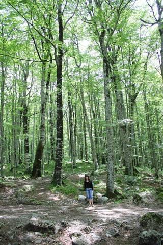 Вот такой высоты деревья в Биоградском заповеднике