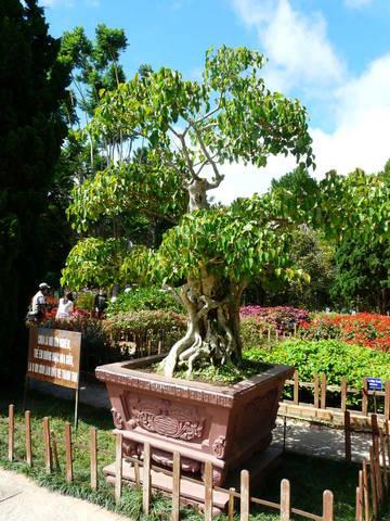 сад с причудливыми растениями