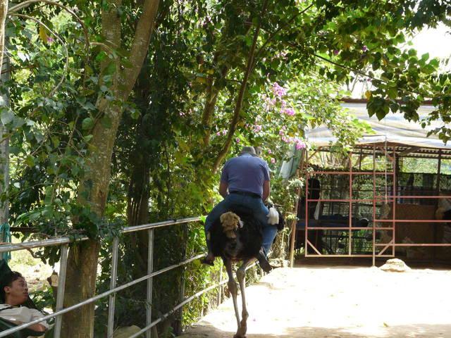 Поездка на страусе в парке у водопада Пренн