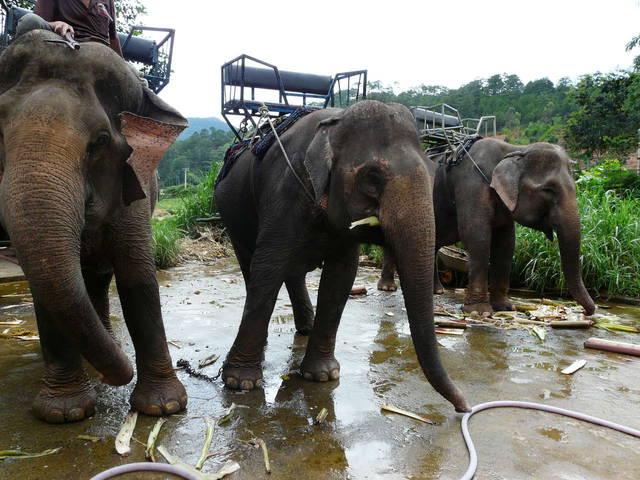 Ездовые слоны в парке у водопада Пренн