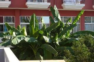 отель Esdem Garden 4*