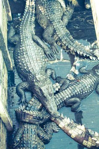 Крокодилы на озере Тон ле Сап