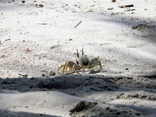 Крабики на пляже