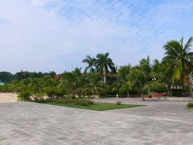 Отель. Домики спрятались за пальмами