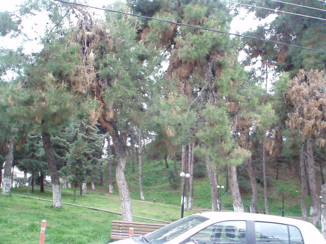 парк напротив