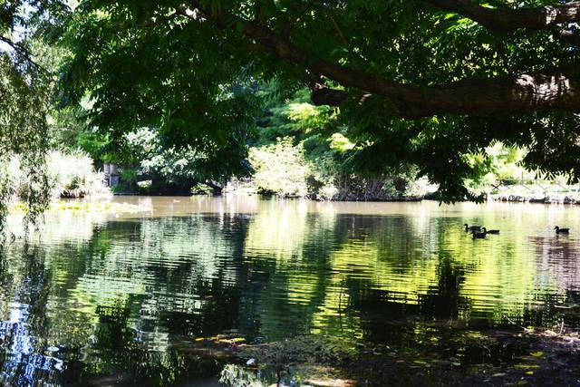 Пруд в парке Семпионе