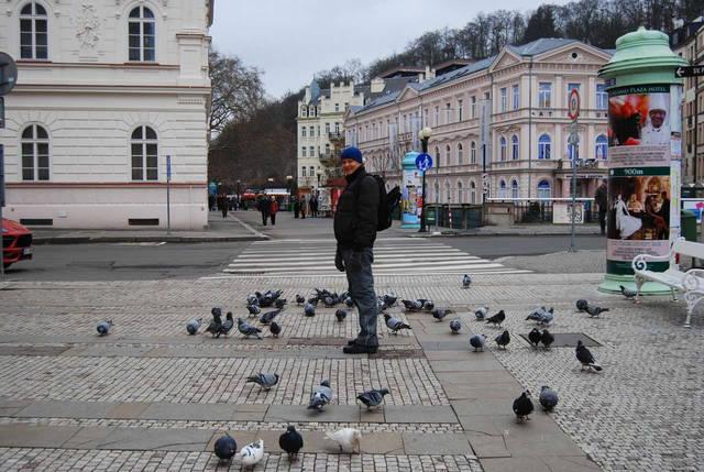 Прогулки с голубями