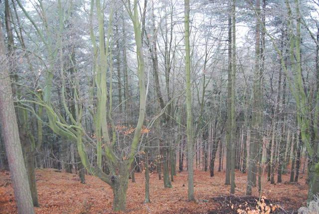 Сказочный лес-2