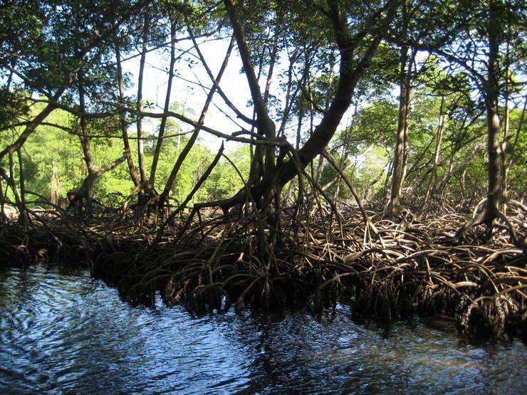 мангровые леса вьетнам