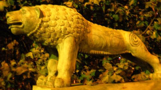 """кошачьи """"потягушки"""" медного льва"""
