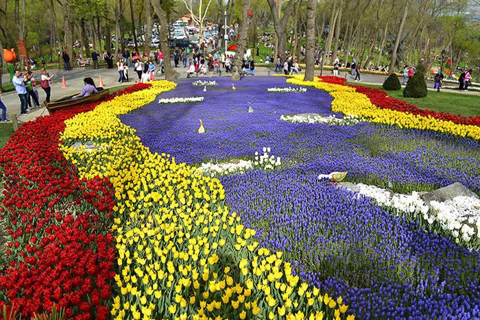 Картинки по запросу Фестиваль тюльпанов