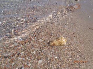 ракушка, найденная в обмельчавшей лагуне