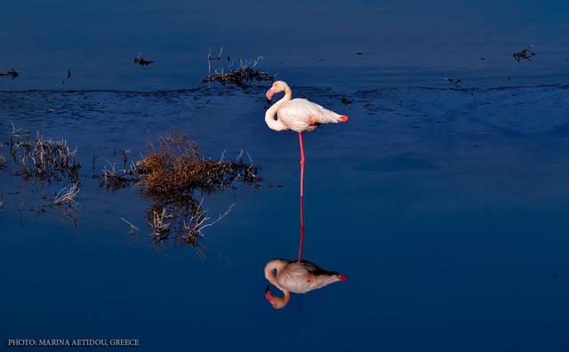 Фламинго в Салониках (ροζ φλαμίνγκο)  Рассказы о Салониках
